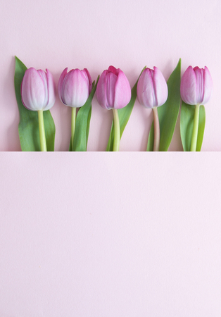 Pink tulips inside a paper fold with space Standard-Bild - 121597184