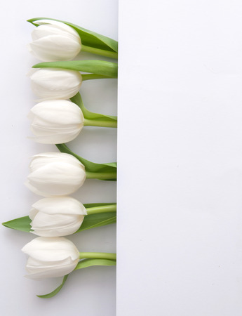 White tulips inside a fold of paper with space for text Standard-Bild - 121597189