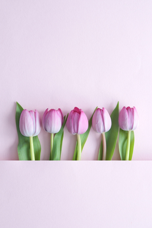 Spring tulips inside a paper fold with space Standard-Bild - 121597198
