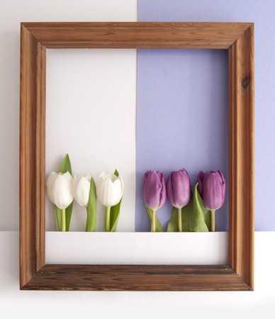 White and purple tulips inside a wooden frame on a paper background Standard-Bild - 121761599