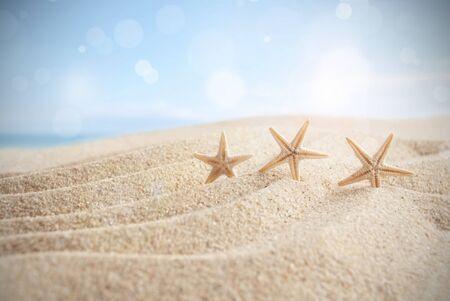 Starfish on a sandy beach Standard-Bild - 124679989