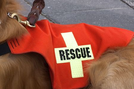 rescue: Search and Rescue dog.
