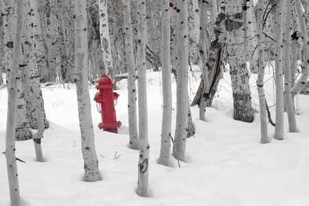 A bright red fire hydrant standing in the snow amongst a grove of barren aspen trees