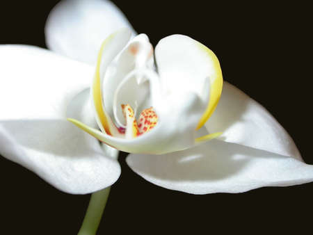 A bright orchid against a black background