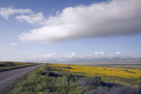 Long road through a yellow field