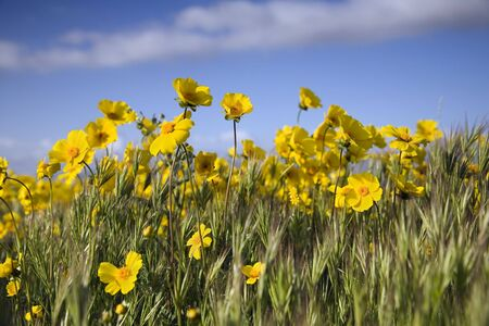 Yellow wildflowers against a bright blue sky