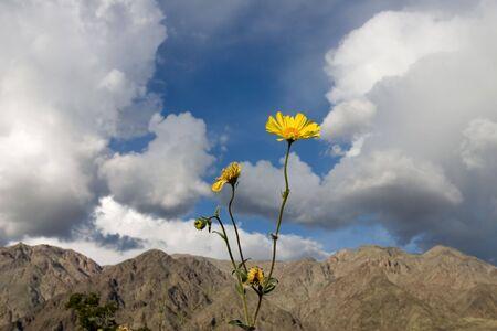 The last wildflower in a barren desert Stock fotó