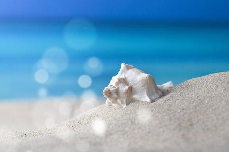 horizont: Makroaufnahme Meeresschnecke am Strand vor azurblauem Meer und Horizont Stock Photo