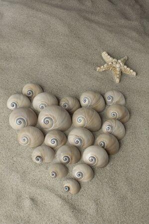 Schneckenherz mit Seestern am Sandstrand Standard-Bild - 40821147