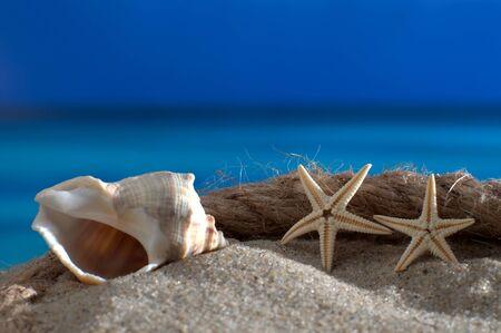beach front: Macro shot starfish seashell and on the beach front Schiffstau azure sea and horizon Stock Photo
