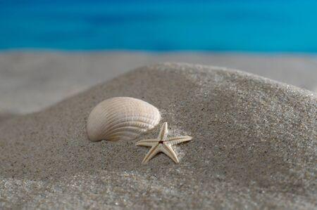 meer: Makroaufnahme Herzmuschel und Seestern am Strand vor azurblauem Meer und Horizont