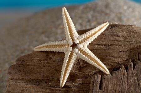 Makroaufnahme Seestern auf verwittertem Holz am Strand