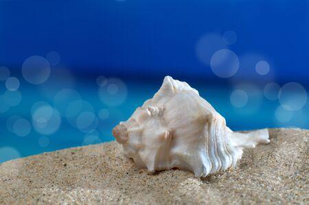 meer: Makroaufnahme Meeresschnecke am Strand vor azurblauem Meer mit Sonnenflecken