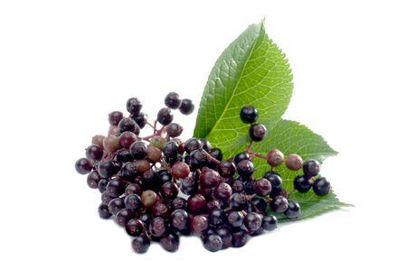 macroshot: Macro shot Elderberries isolated on white Stock Photo