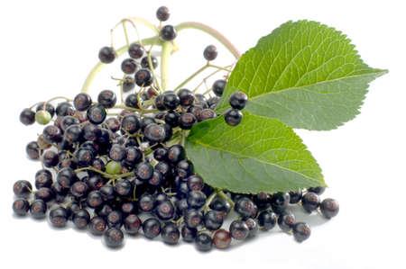 macroshot: Macro shot elderberries isolated on white