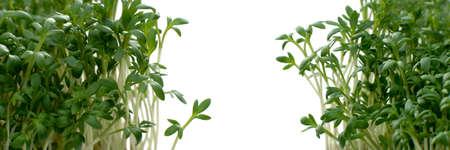 macroshot: Macro shot garden cress with copy space Stock Photo