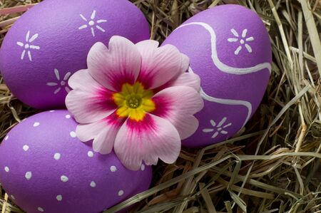 macroshot: Colourful easter eggs and primerose flower in a nest Stock Photo