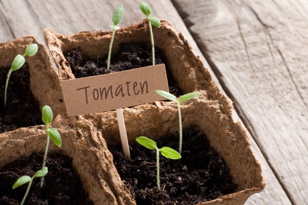 guerilla: Sprouting tomato seedlings with lettering Tomaten (german for tomatoes)