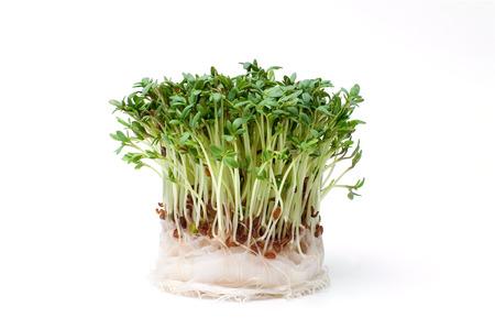 Fresh garden cress isolated on white Stok Fotoğraf