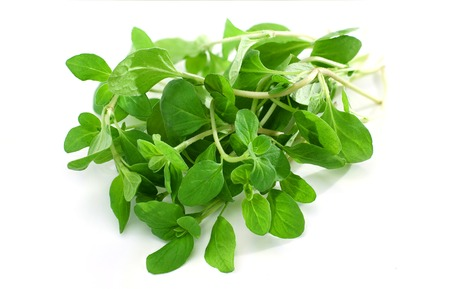 Fresh marjoram isolated on white background