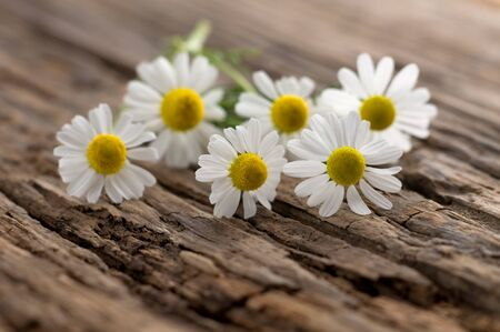 Chamomile blossoms on weathered wood Stok Fotoğraf