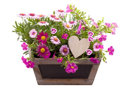 Beautiful summer flowers and a wooden heart isolated