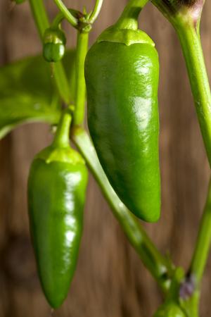 Growing bell peppers in the garden Stok Fotoğraf