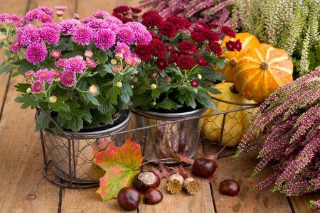 Autumnal decoration with heather Stok Fotoğraf