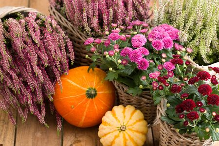 Autumnal decoration with pumpkins and heather