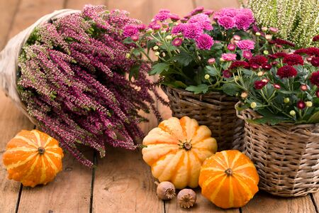 Autumnal decoration - flowers and pumpkins