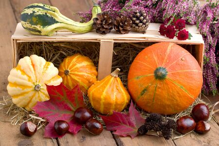 Autumnal decoration with flowers and pumpkins