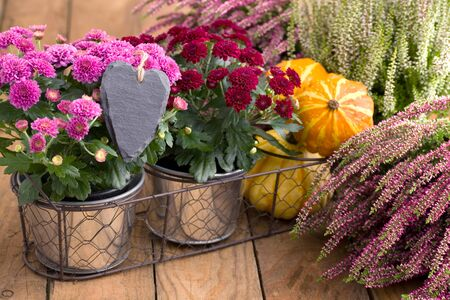 Autumnal decoration with heart and flowers on wood Stok Fotoğraf