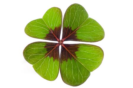 Four-leaf clover isolated against white - lucky charm