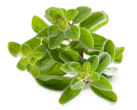 Fresh oregano isolated against white Stock Photo