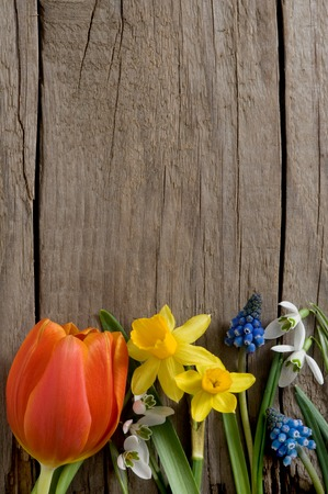 Rustic wooden background with spring flowers Stok Fotoğraf