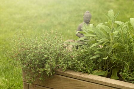 Fresh garden herbs growing in herb pot with Buddha figure