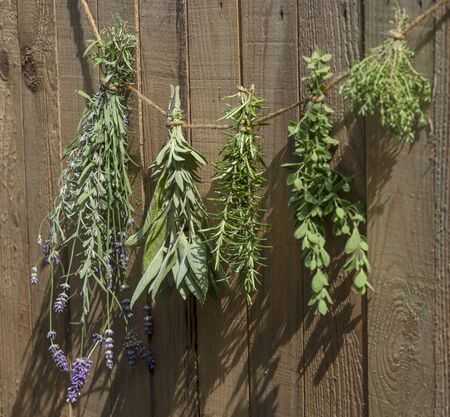 Culinary herbs hung up to dry in front of a rustic wooden background
