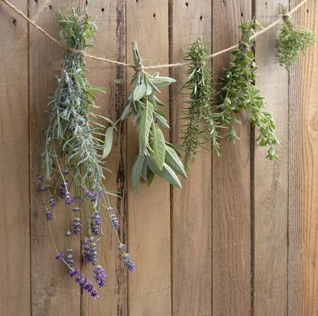 Fresh culinary herbs drying in front of a rustic wooden background