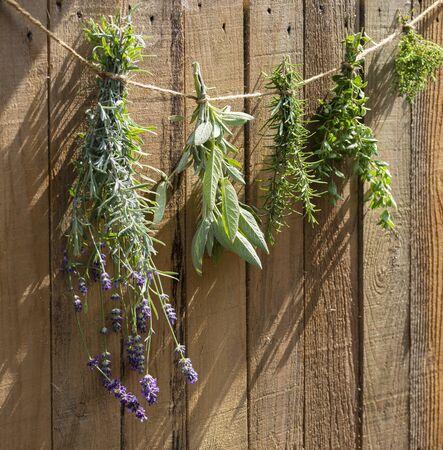 Garden herbs hanging from a cord 免版税图像
