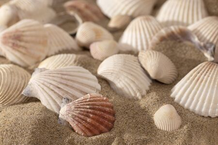 Shells on sunny beach - macro shot 免版税图像