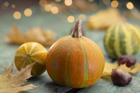Autumn mood - orange pumpkins on turquoise wood with chestnuts and lihts Stok Fotoğraf