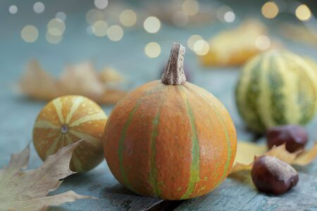 Decoration with colorful pumpkins and party lights