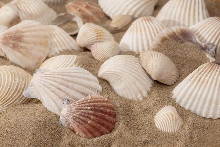 Sea shells on a sunny beach 免版税图像