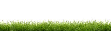 Green grass isolated - banner Stok Fotoğraf