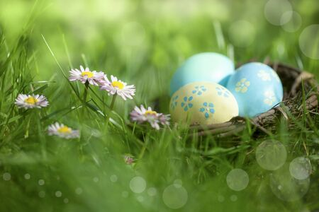 Beautiful Easter decoration - Nest with colorful easter eggs on meadow with daisy flowers in the sunlight