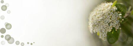 Sumptuous flowers in springtime 免版税图像