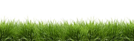 Lush green grass isolated against white background - panorama - banner