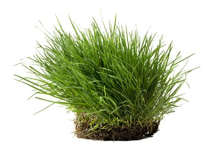 Tuft of lush grass with its roots isolated against white