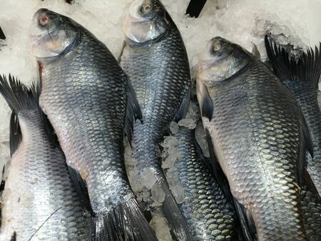 Catla fish which is fresh water type fish arranged in market for sale Stock Photo