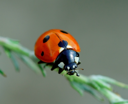 Ladybird on leaf. Spring nature photo